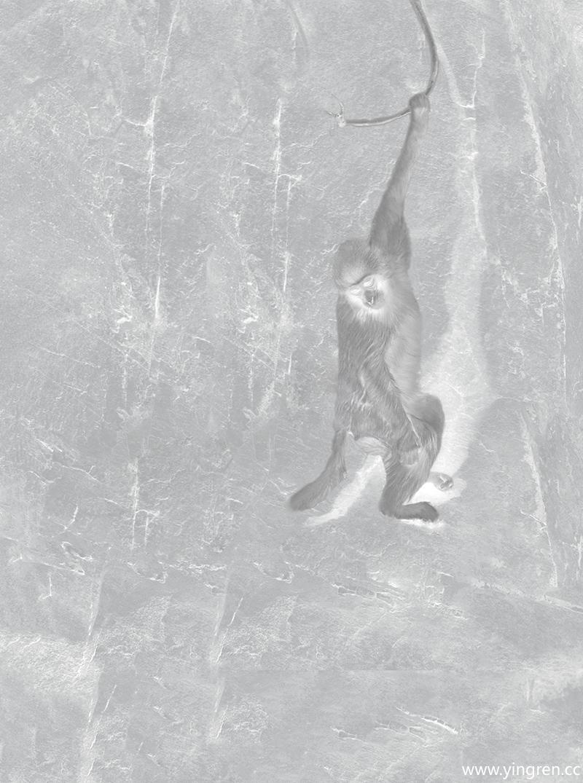 猴韵-守月亮